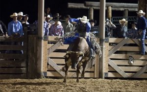 Cowboys watch as the bull rider leaves the chute