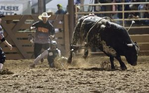 The bull gets the best of this rider
