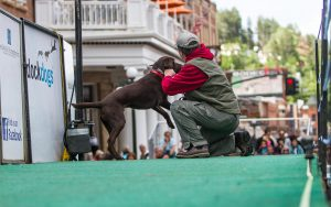 Wild Bill Days DockDogs Competition participant and owner