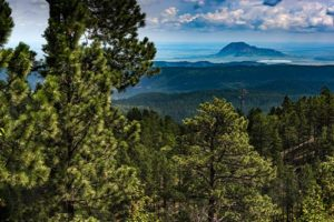 View of Black Hills National Forest